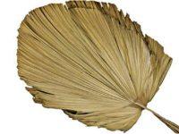 Produktbild Palmwedel